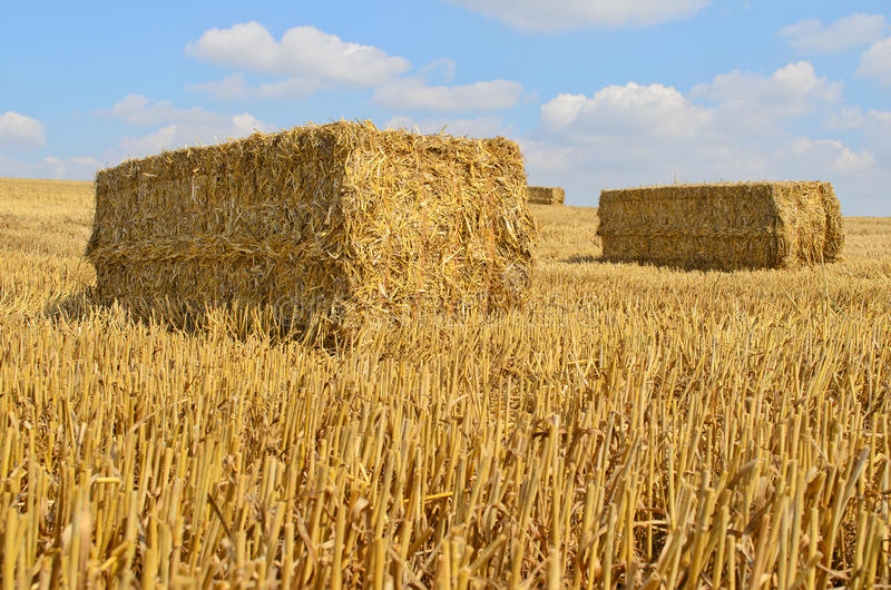 Straw bale drying in the sun royalty free stock photos