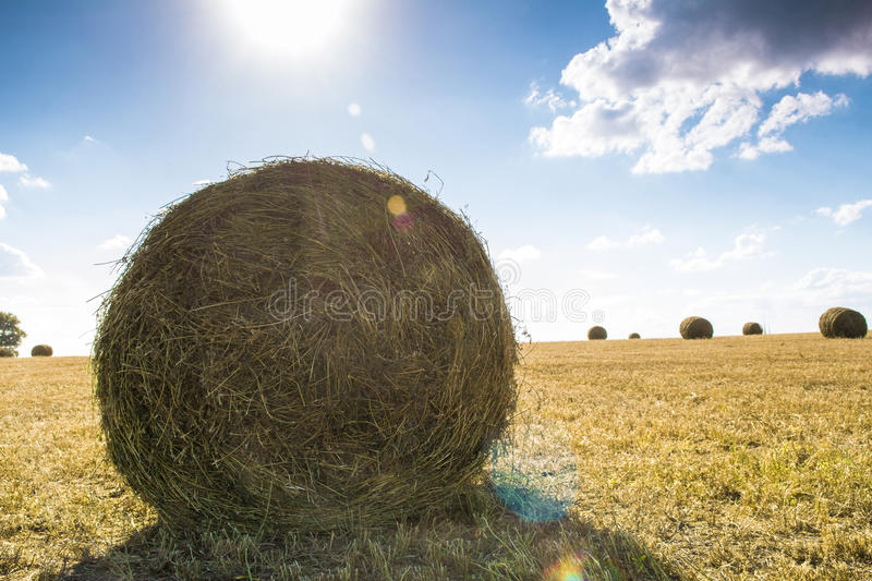 Straw bale on the field. Bales of straw on the mown pole.Goluboe sky with clouds royalty free stock photo