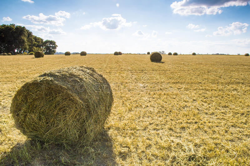 Straw bale on the field. Bales of straw on the mown pole.Goluboe sky with clouds stock photography