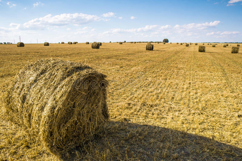 Straw bale on the field. Bales of straw on the mown pole.Goluboe sky with clouds royalty free stock images