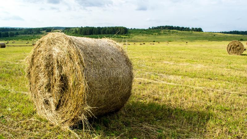 Straw bale on the field in summer stock photos
