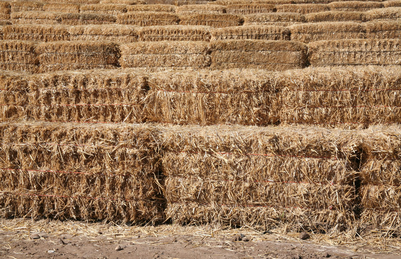 Download Straw bale lines stock image. Image of business, ground - 1409017