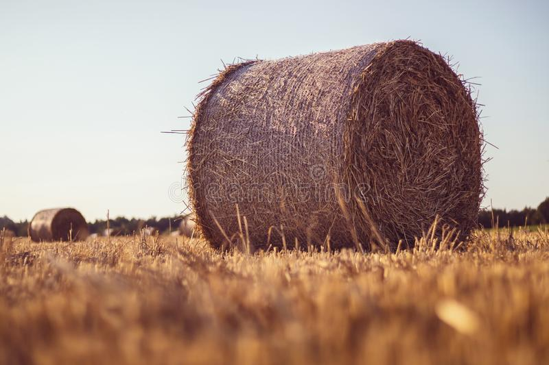 Straw bale on a stubble field. Straw bales on a stubble field, a forest in the background, sunset, clear sky, landscape in golden sunlight stock photos