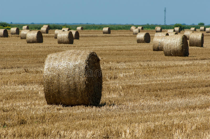 Download Straw bales stock photo. Image of agriculture, agricultural - 26670856