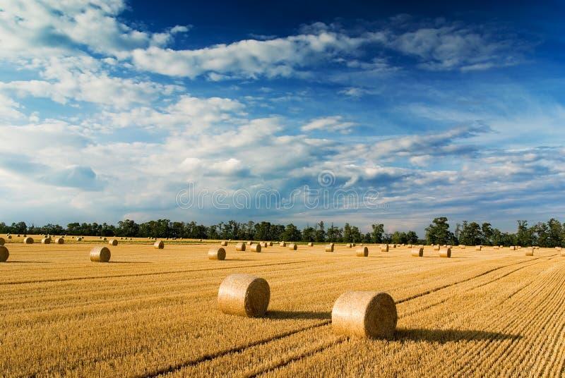 Straw bales stock photo