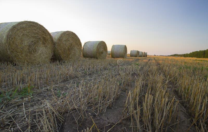 Straw Bales photos libres de droits