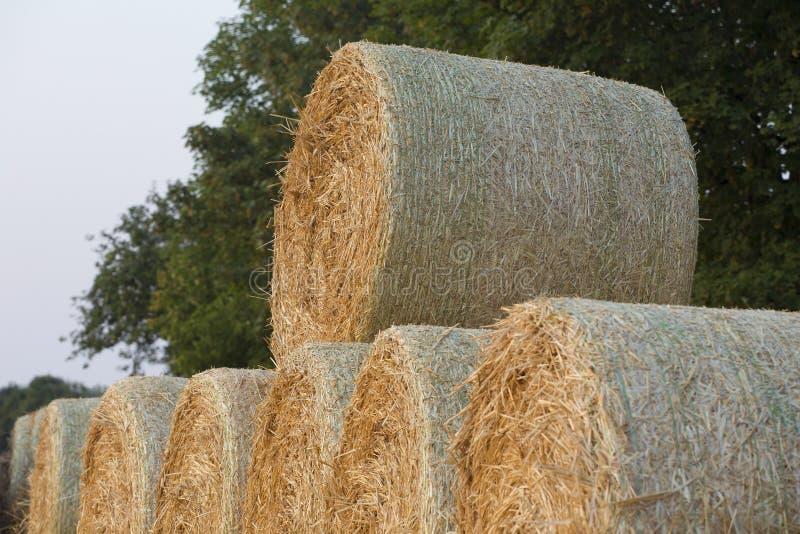 Straw Bales immagini stock