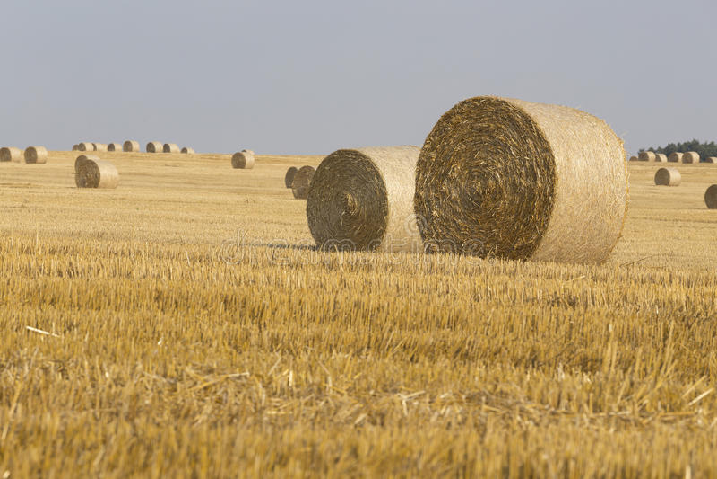 Straw Bales immagine stock libera da diritti