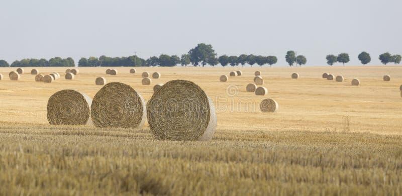 Straw Bales fotografia stock
