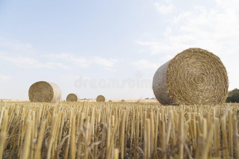 Straw Bales fotografie stock libere da diritti