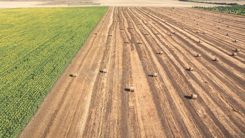 Straw Bales em um campo agrícola imagens de stock