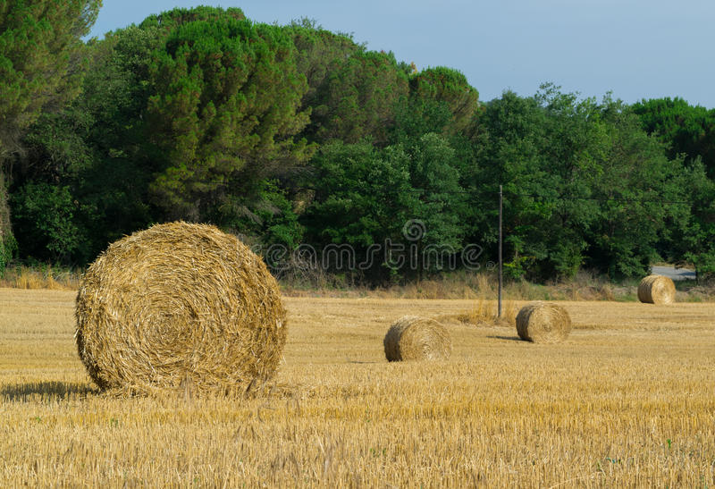 Straw bales in field stock image
