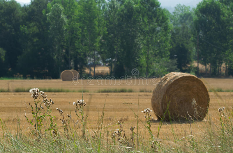 Straw bales in field royalty free stock photography