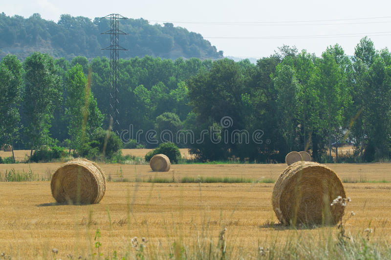 Straw bales in field royalty free stock image