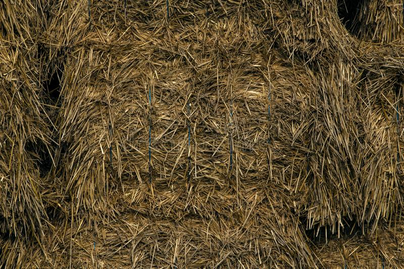 Straw bales needed at the stable for livestock in the winter stock images