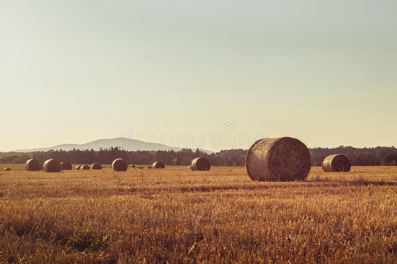 Straw bales on a stubble field. Hills and a forest in the background, sunset, clear sky, landscape in golden sunlight stock photo