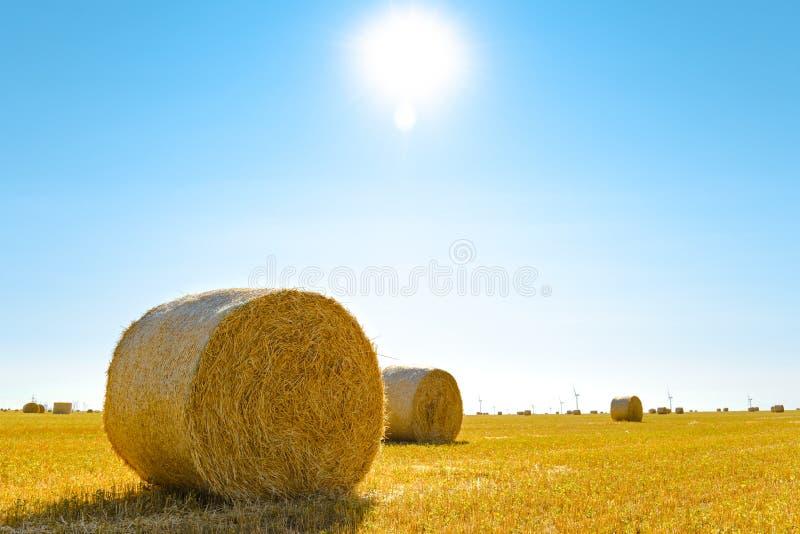 Straw Bales sur le champ jaune lumineux sous le ciel bleu images libres de droits