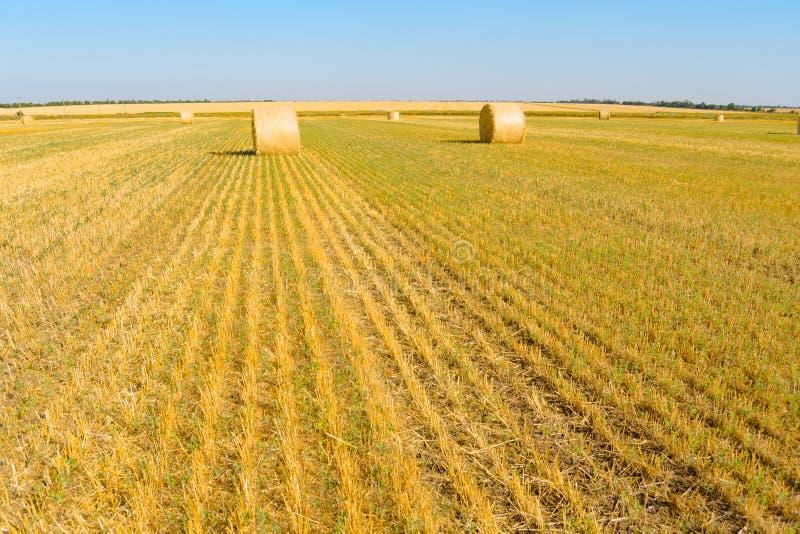 Straw Bales sur le champ jaune lumineux sous le ciel bleu photo stock