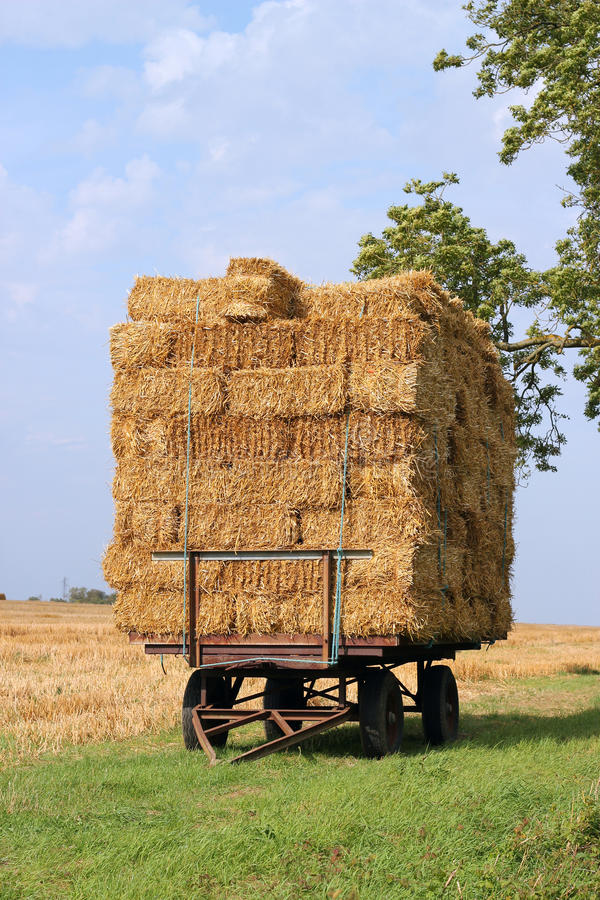 Straw bales on a trailer. stock photo