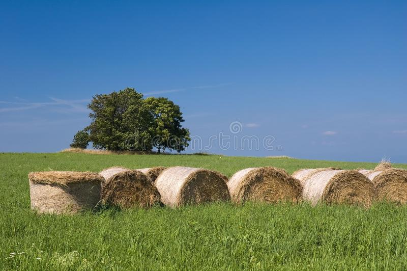 Download Straw Bales, Trees And Meadow Stock Photo - Image of colourful, solitary: 11679688
