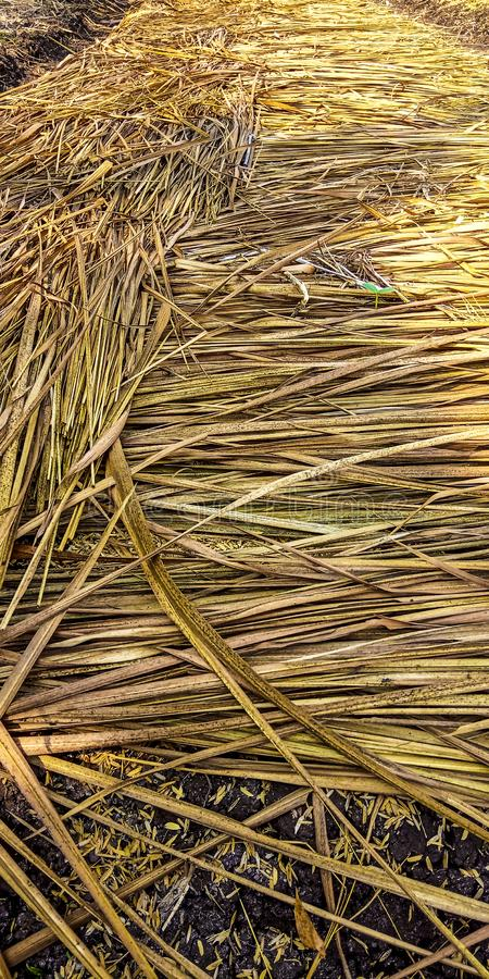 Straw that covers rice royalty free stock photography