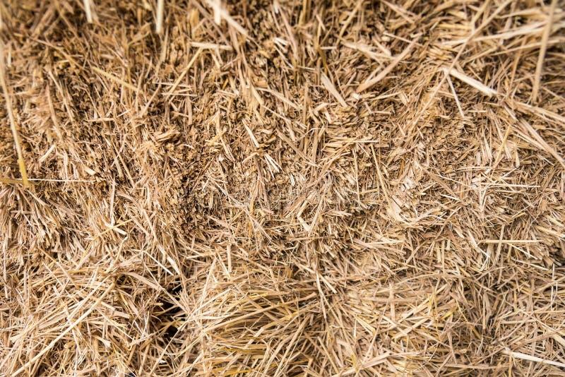 Straw, dry straw, straw background texture stock image
