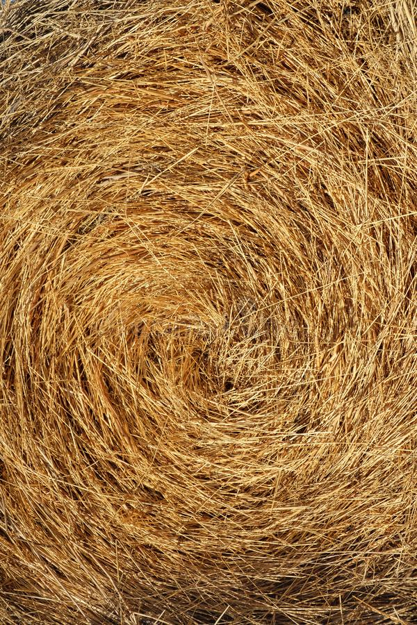 Straw, dry straw, hay straw yellow background, hay straw texture stock images