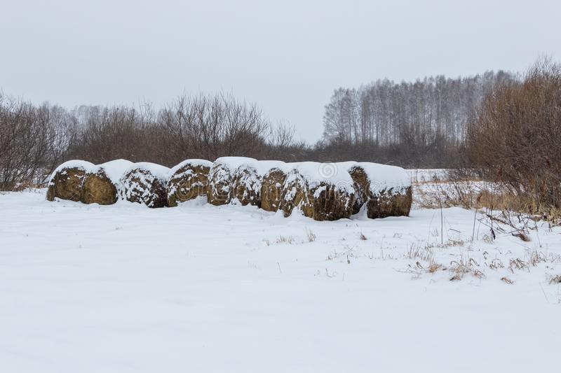 Straw Fodder Bales in Winter: straw that were left after the fall harvest are used as animal feed and bedding during the winter royalty free stock photography