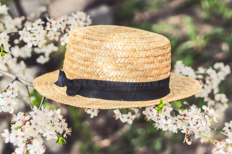 Straw hat on a flowering branch stock photo