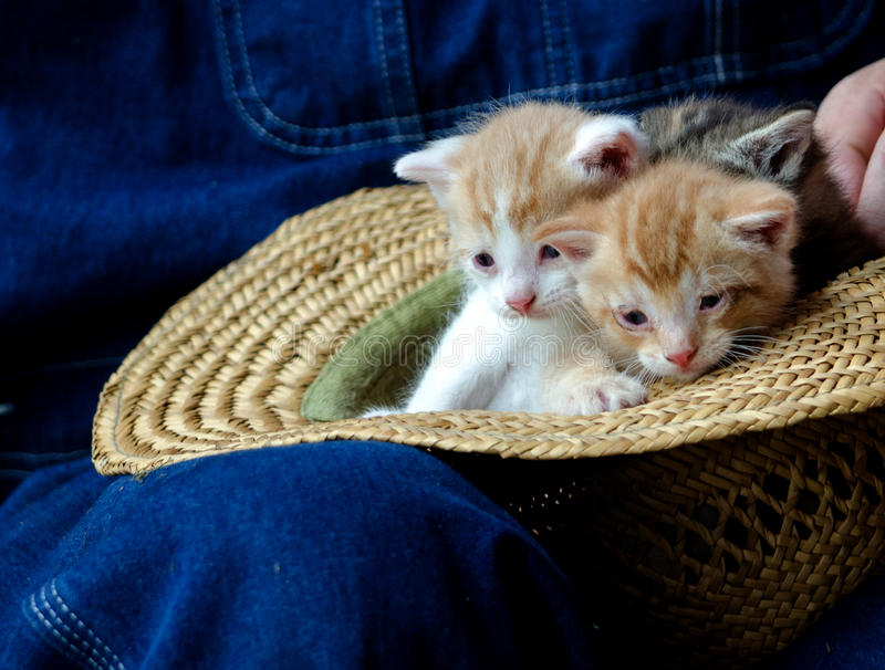 Straw Hat and pair of of kittens stock image