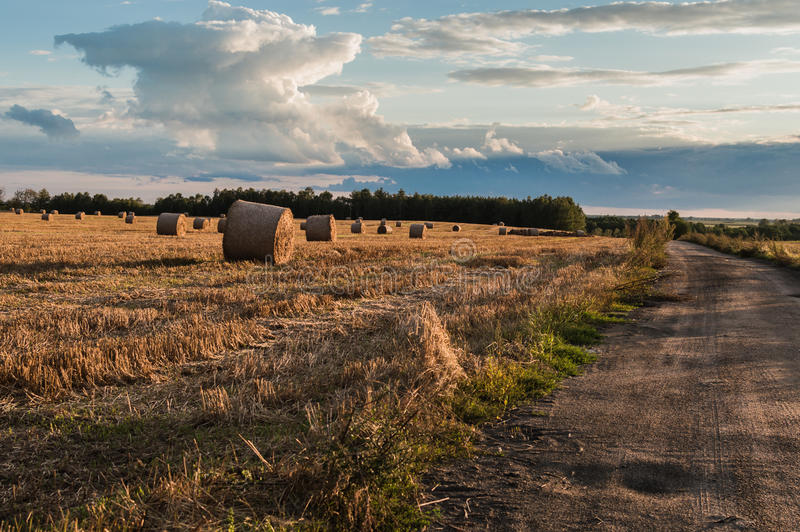 Straw or hay stacked in a field after harvesting.  royalty free stock photos