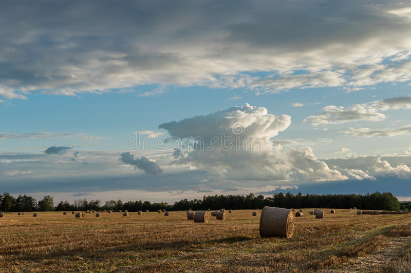 Straw or hay stacked in a field after harvesting.  royalty free stock image