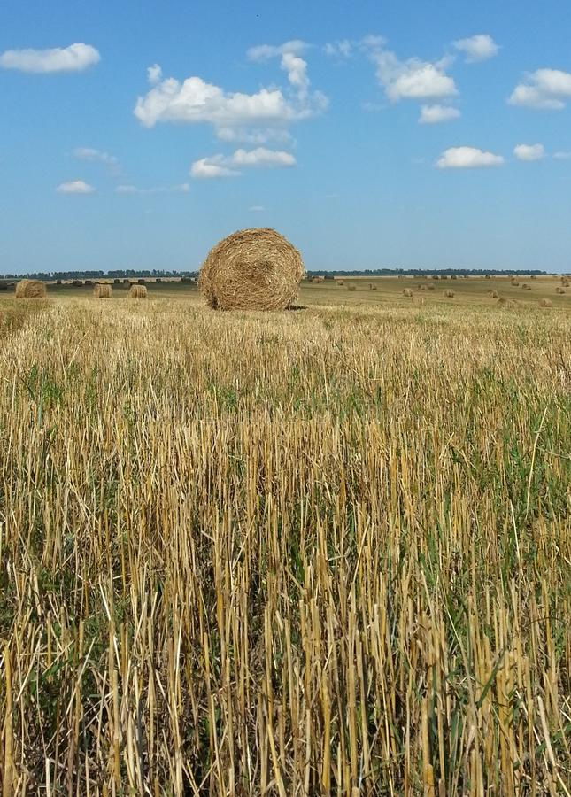 Download Straw Haystacks On The Field Stock Image - Image: 43214465