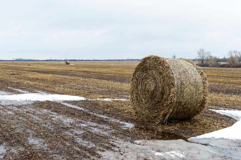The straw left on the field after the grain harvest, the formation of the dense rolls for use as a fuel, the production of pellets. And briquettes royalty free stock photography