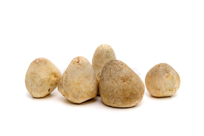 Straw mushroom isolated on white background stock photo