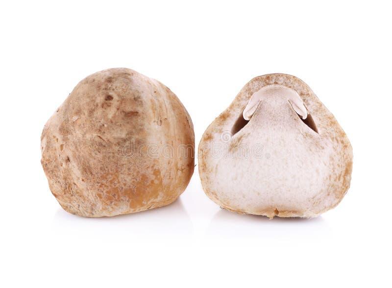 Straw mushroom isolated on white background. The straw mushroom isolated on white background stock photography
