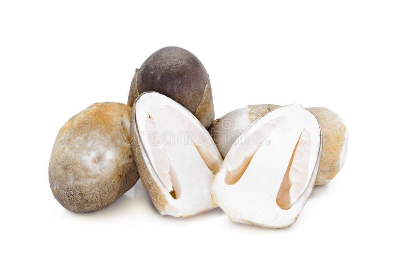 Straw mushroom isolated on white stock image