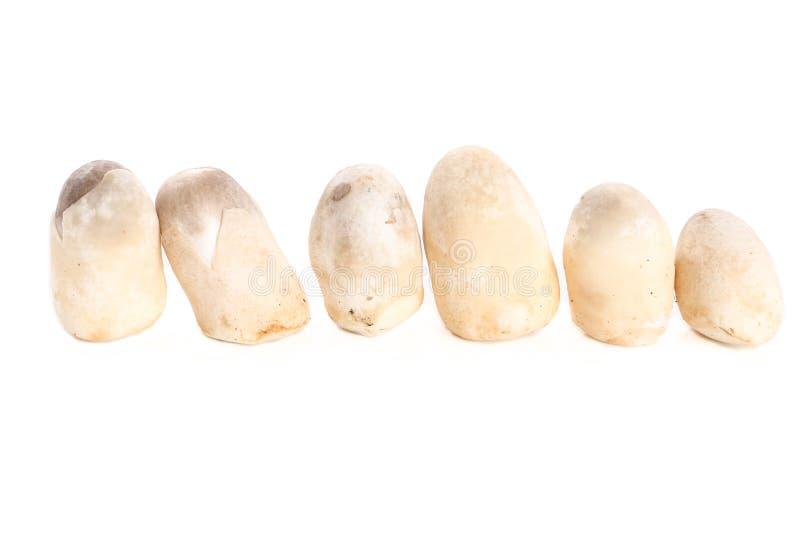 Straw mushroom on white background - Isolated stock photo