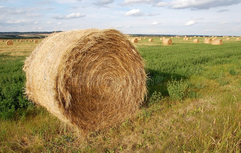 Straw piles royalty free stock images