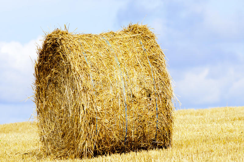 Download Straw roll stock photo. Image of roll, countryside, field - 29644398