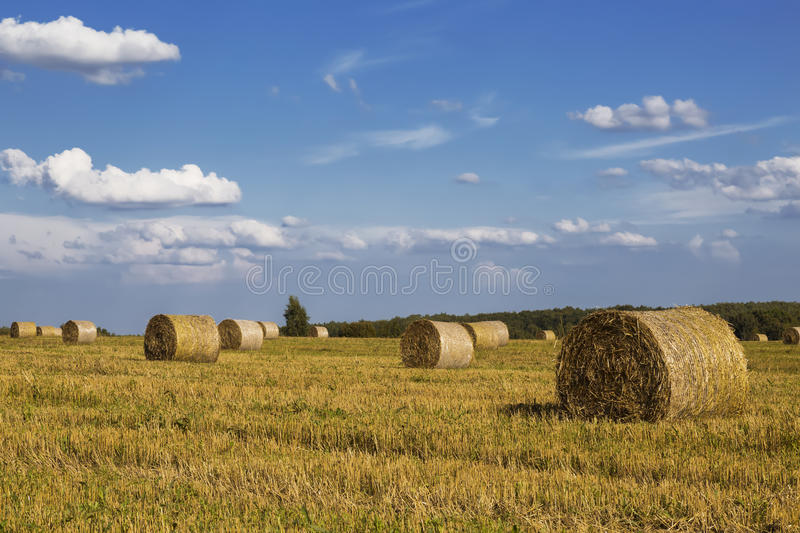 Straw rolls on farmer field stock image
