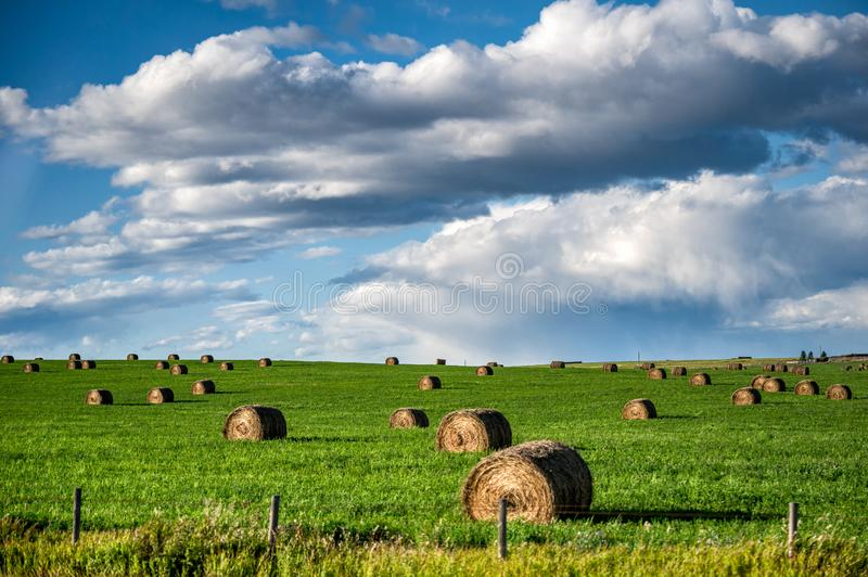 Straw rolls on green pasture with cloud in the sky royalty free stock photo