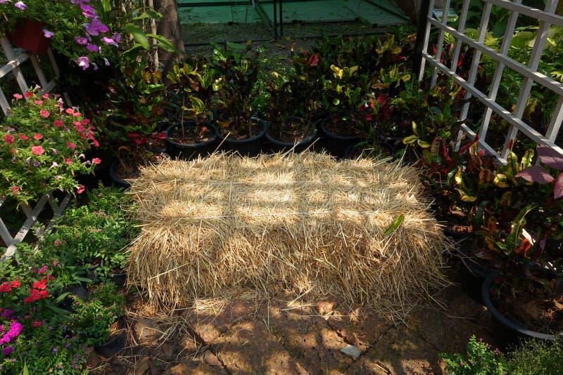 Straw Seats made of straw hay stock photo