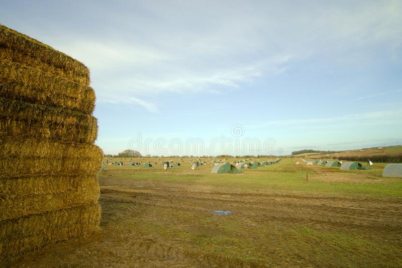 Straw stack and pig farm. stock photography