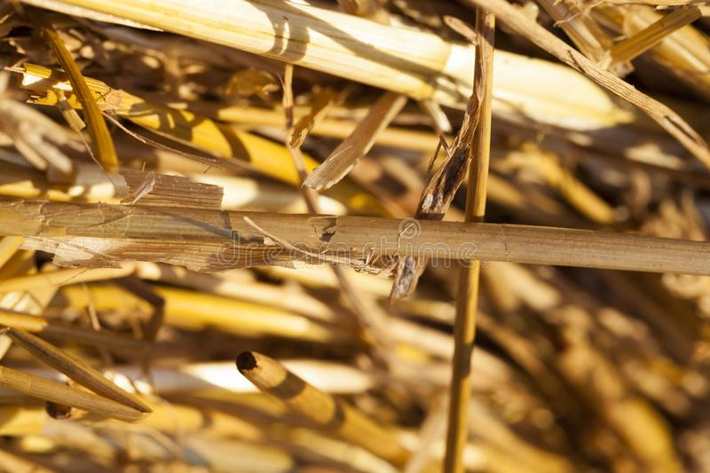 straw a stack stock image