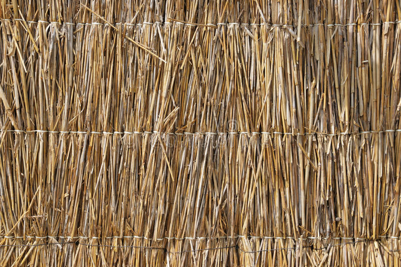 Straw Texture Stock Photography Image 12781252