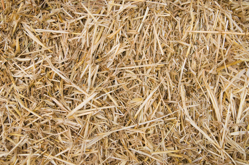 Download Straw Texture stock image. Image of food, field, harvest - 22790027