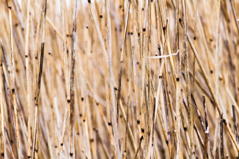 Straw texture or background royalty free stock images