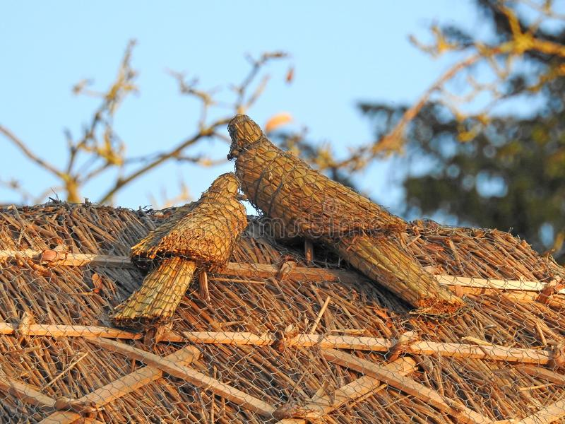 Straw thatch doves on cottage thatched roof. Photo of a kent country thatched roof with straw thatch dove birds in rural countryside stock image