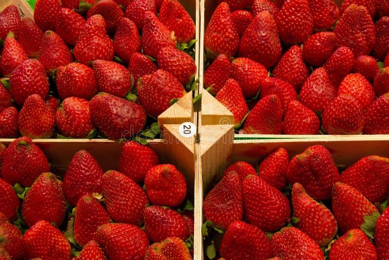 Strawberies royaltyfri fotografi